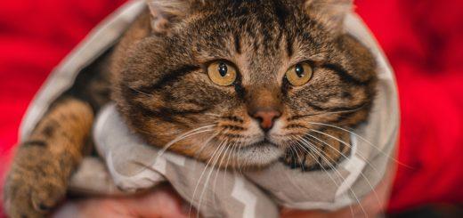 На этом фото изображен толстый кот, олицетворяющий английскую идиому